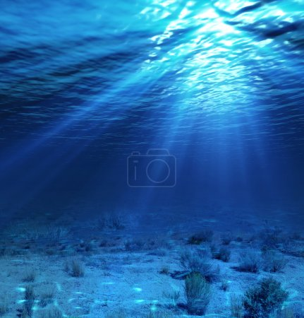 Underwater landscape and backdrop with algae...
