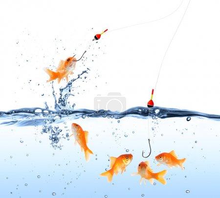 Goldfish bait - capture and deception concept