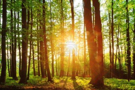 Photo pour Beau coucher de soleil derrière la forêt Haute-Franconie - image libre de droit