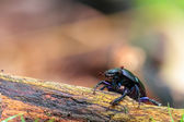Forest Bug