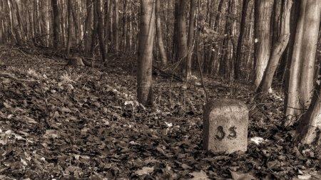 Photo pour Incroyable de voir tomber forrest. photo de belle nature d'un européen forrest en automne Bavière, Allemagne. atmosphère fantasmagorique et effrayant. - image libre de droit