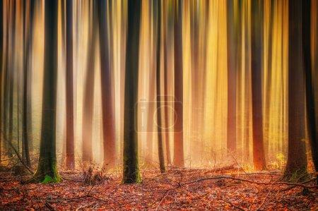Photo pour Enchanted forrest d'automne et d'hiver - image libre de droit