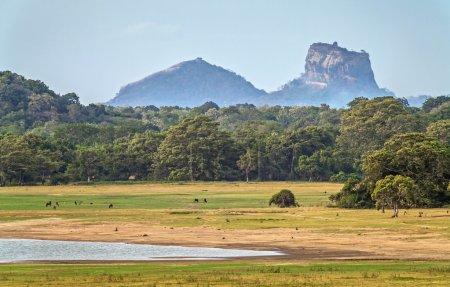 Landscape with Sigiriya Rock