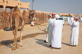 Traditional Camel Market in Al Ain in the UAE