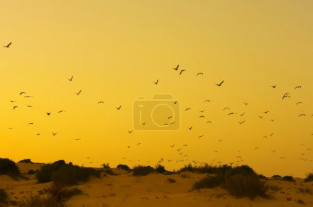Yellow sunset with birds in a beach