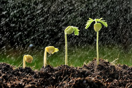Photo for Group of green sprouts in the rain. - Royalty Free Image