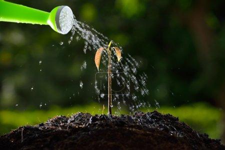 Photo pour Verser une jeune plante d'un arrosoir - image libre de droit