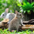 Two rabbits bunny in the garden...