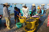 Zakokrhal atmosféra na rybí trh na pláži