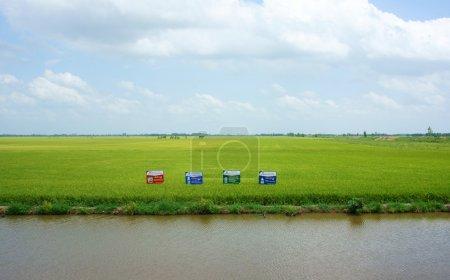 Photo pour Rizière verte dans le delta du Mékong sous un ciel nuageux, rizière le long d'un fossé, panneau publicitaire sur les terres agricoles, air frais au village - image libre de droit