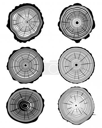 Illustration pour Coupe transversale du tronc, illustration vectorielle - image libre de droit