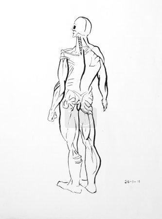 Photo pour Illustration du corps humain, sans peau, photo faite au crayon. - image libre de droit