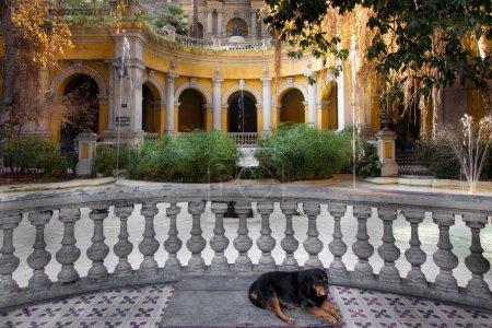 Photo pour Belle véranda de maison individuelle jaune avec rottweiler resring gros plan au Chili . - image libre de droit