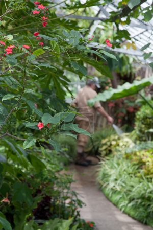 Photo for Small red flowers on green bush with gardener on background - Royalty Free Image