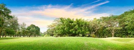 Photo pour Arbre dans le terrain de golf à l'heure du coucher du soleil - image libre de droit