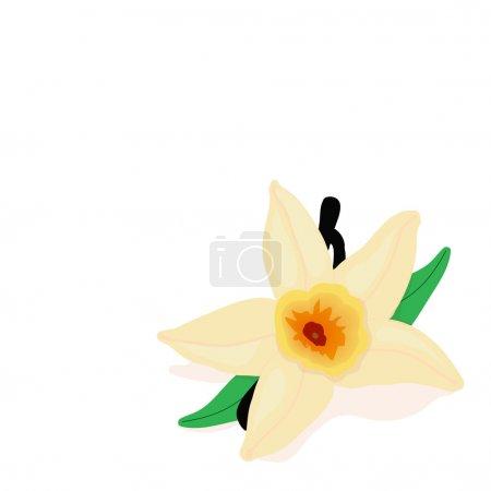 The vanilla flower