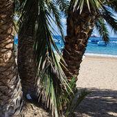 Strand playa de las teresitas Tenerife