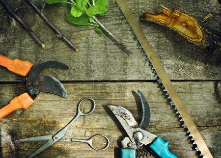 Set of garden tools. Pruning in the garden.