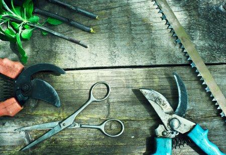 Set of garden tools. Pruning in the garden. Frame of garden tool