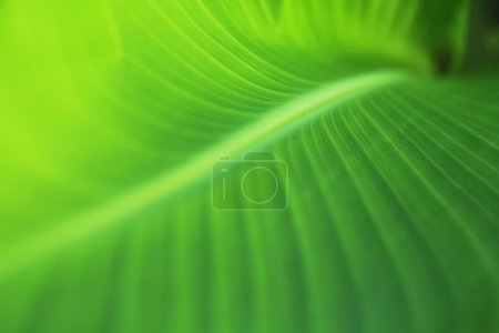 Photo for Leaf texture with selective focus - Royalty Free Image