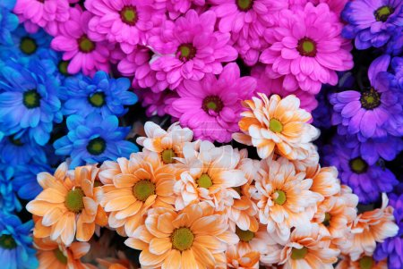 Photo for Variety of colorful fresh flowers are bunched together - Royalty Free Image