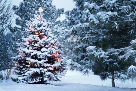 Brightly Lit Snow Covered Christmas Tree In Snowstorm