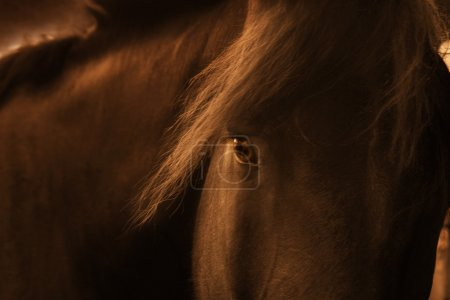 Late Day Portrait Of A Playful Farm Horse