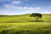 Poklidné přírodní krajina Midwest kansas tallgrass prairie zachovat