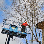 Worker assigned to the pruning of a tree