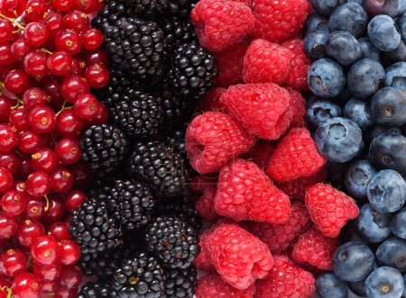 Photo for Mix of differrent berries - Royalty Free Image
