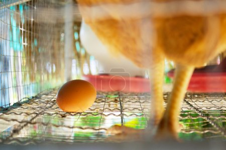 Photo for Eggs of hens in cages at farm - Royalty Free Image