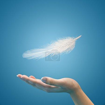 Photo pour Plume flottante sur les mains de la femme. Fond bleu . - image libre de droit