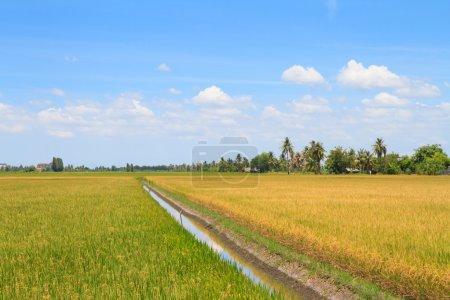 Photo pour Bewässerung-Kanal in einem ländlichen tropischen Reisfeld - image libre de droit