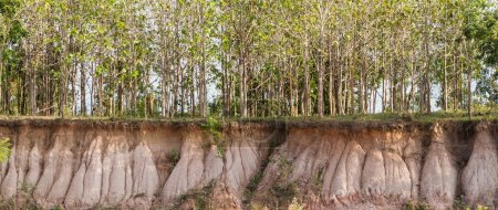 In the tree and section of soil. Erosion due to wa...