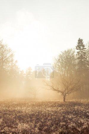 Photo pour Le soleil du matin frappe un arbre sans feuilles debout seul dans un champ de végétation basse . - image libre de droit