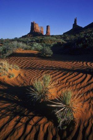 Rippled Sand And Desert Vegetation
