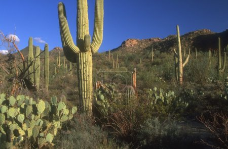 Photo for Different Cacti - Royalty Free Image