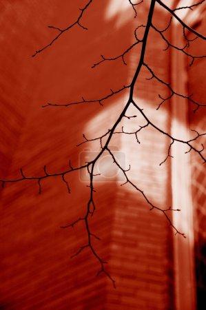 Photo pour Arbre branche Budding Contre Brick Building - image libre de droit