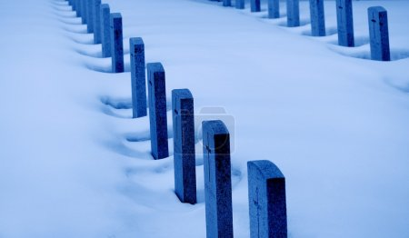 Rows Of War Graves