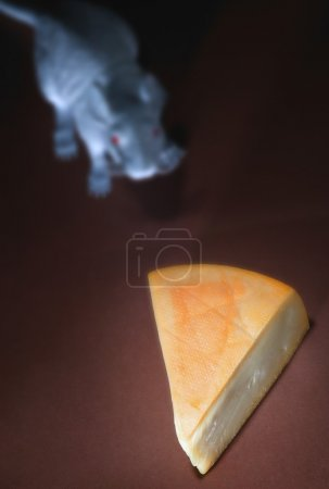 Piece Of Cheese With Rodent