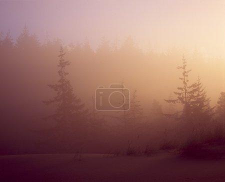 Photo pour Dunes de sable dans le brouillard - image libre de droit