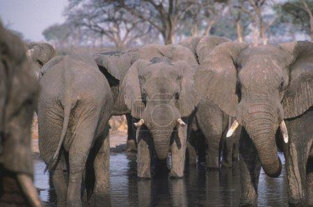 Elephant Herd At A Waterhole In Africa