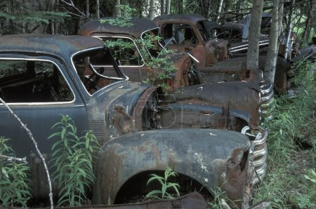 Old Vehicles In A Forest