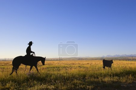 Cowboy Rounding Up A Cow