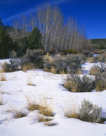 Winter Landscape In Great Basin National Park