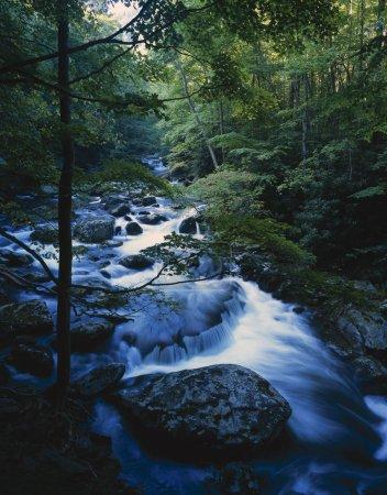 Photo pour Cours d'eau en mouvement, rochers, arbres forestiers, fin de l'été, tremont, parc national de great smoky mountains - image libre de droit