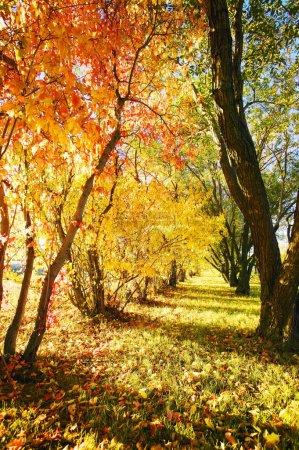 Photo pour Arbres en automne - image libre de droit