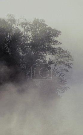 Photo pour Arbre enveloppé dans le brouillard - image libre de droit