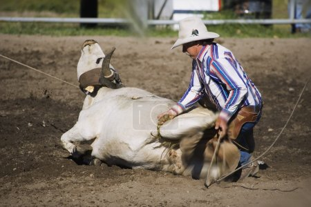 Photo pour Steer de longhorn lasso cow-boy - image libre de droit