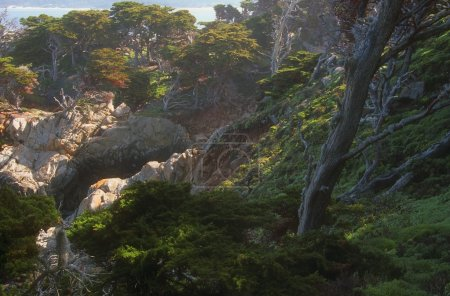 Rocky Hillside And Trees